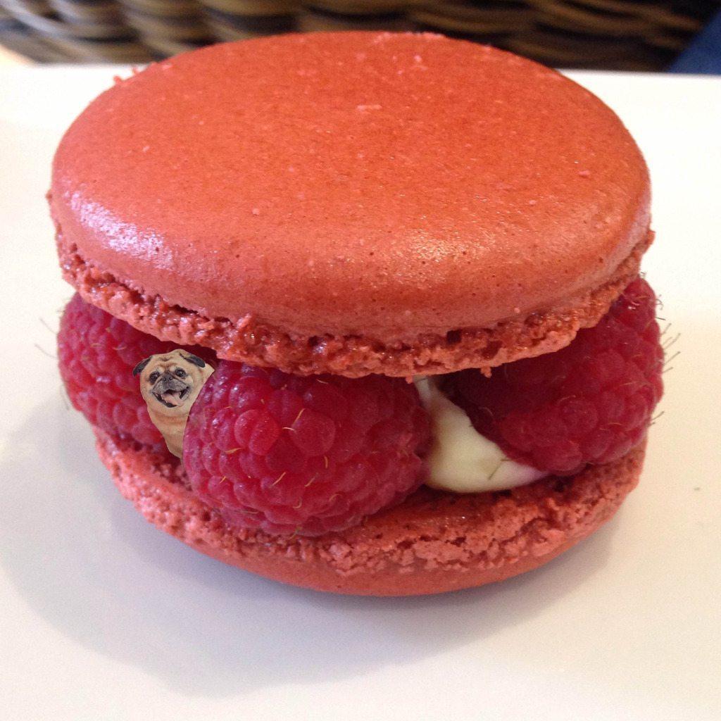 raspberry-macaroon-ticety
