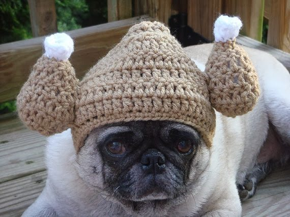 thanksgiving pug 2