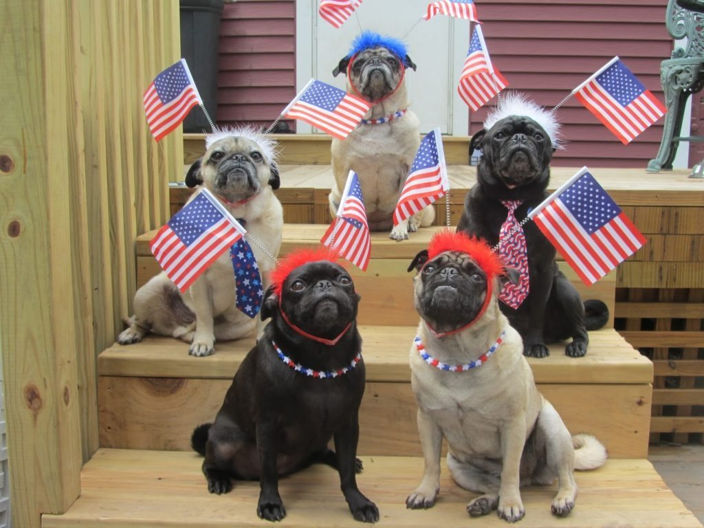 Where To Spend July 4th In Miami Miami Food Pug