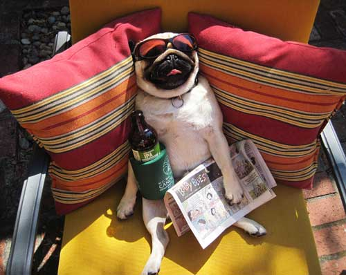 Labor Day Weekend 2016 Where To Celebrate In Miami Miami Food Pug