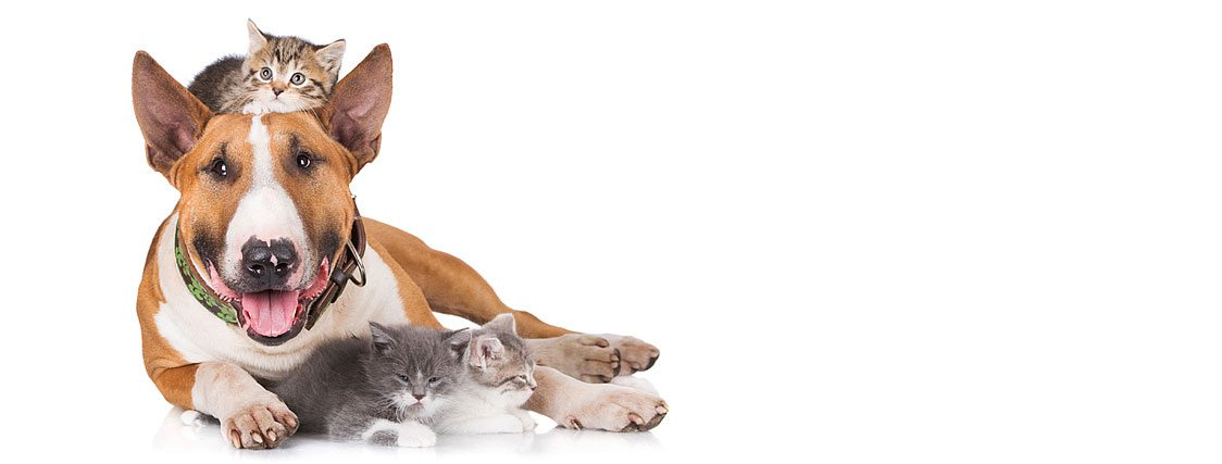 Humane Society Dog Adoption Miami